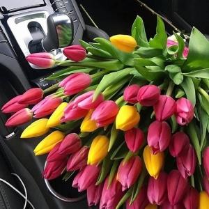 Тюльпаны Голландские 25 штук